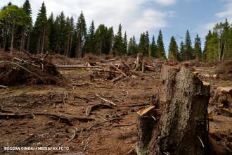 Concluzia dură a unui raport UNESCO: România își bate joc de pădurile sale