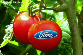 Automobile de Masterchef. Ford va folosi rosii si nuci de cocos ca sa fabrice masini