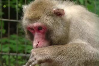 Cinci maimute au fugit de la Zoo Tg. Mures si s-au adapostit in padure. Cum vor angajatii sa le recupereze