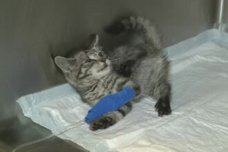 Pisica impuscata in cap si lasata sa moara in tufis. Medicul veterinar care i-a salvat viata a mers imediat la politie