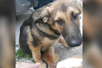 Proteste in Constanta dupa ce un caine infirm a fost eutanasiat. Un om al strazii ii spune povestea cu lacrimi in ochi