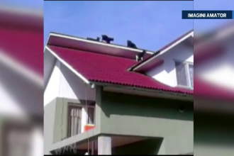 Scene comice in Maramures, unde patru iezi s-au urcat pe acoperisul unei case. Ce s-a intamplat cand au ajuns stapanii acasa