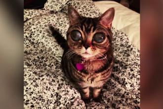 Boala bizara din cauza careia o pisica are ochi ca de extraterestru. De ce sufera Matilda