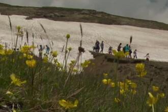 Turistii care au ales sa isi petreaca weekend-ul la munte s-au putut juca in zapada. Ce temperaturi au fost in Bucegi