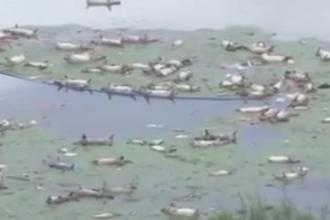 Inundatii devastatoare in China. 16.000 de porci au murit dupa ce apele au maturat o ferma. Cat va dura adunarea lesurilor