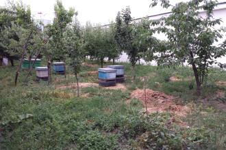 Ce au gasit politistii in stupii de albine din curtea unui botosanean. A fost nevoie de interventia jandarmilor