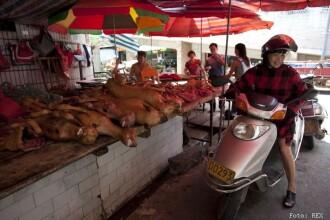 Cel mai crud festival din lume in imagini. Chinezii au sarbatorit solstitiul de vara omorand sute de caini