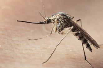 Cercetatorii brazilieni au facut o descoperire alarmanta despre virusul Zika