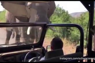 Arnold Schwarzenegger a filmat momentul intalnirii cu un elefant, in timpul unui safari in Africa de Sud