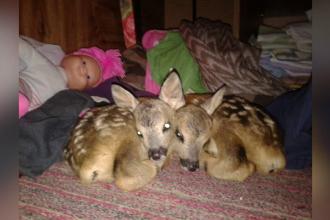 O familie din Hunedoara a crescut cu biberonul 3 pui de caprioara. Ce le-a facut un angajat de la zoo apoi e revoltator