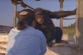 A fost salvat de la experimente, iar dupa 25 de ani si-a revazut salvatoarea. Gestul emotionant facut de animal. VIDEO