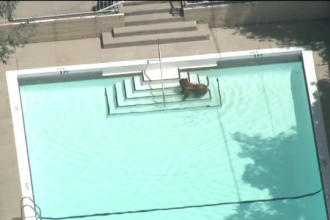 Urs toropit de caldura filmat in timp ce se racorea in piscina unei vile. Proprietarii au privit totul de la balcon