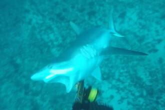 A iesit la pescuit cu sulita, dar a dat peste un rechin fioros. Atacul surprins de camera purtata de tanar. VIDEO
