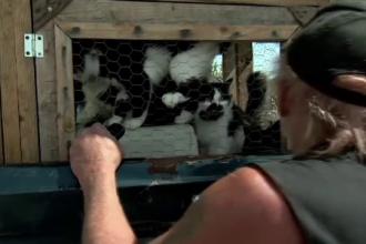 A plecat in vacanta impreuna cu cele 22 de pisici ale lui. De ce nu a reusit barbatul sa-si gaseasca o prietena pana acum