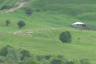 Un cioban din Dambovita si 100 de oi au murit, loviti de fulger. Meteorologii au emis COD PORTOCALIU de vreme rea