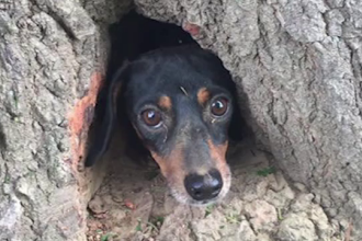 Curiozitatea i-a adus numai necazuri unui catel. Cum a ajuns simpaticul patruped in scorbura unui copac