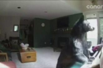 Un urs a intrat prin efractie in casa unei femei din SUA si a inceput sa cante la pian. Imaginile surprinse de camere