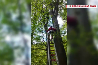 Parapantist ramas agatat in copaci, la 40 de metri inaltime, in Sinaia. Barbatul, salvat de pompieri
