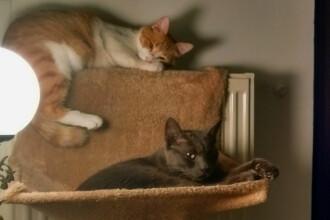 Frauda cu pisici moarte, in Marea Britanie. Cati bani a obtinut un barbat dupa ce a inventat o tragedie cu feline