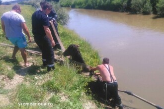 Pompierii au reusit sa salveze un cal de la inec in raul Barlad. Ce au gasit langa animal