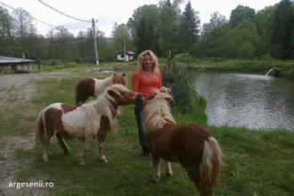 Doi ponei au fost furati de la o pensiune din Arges. Satenii spun ca sunt obisnuiti cu furtul de animale