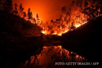Incendii de padure in Portugalia cu zeci de morti