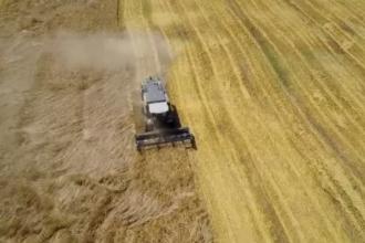 Romania a redevenit granarul Europei: exporturile de cereale sunt cele mai mari din UE. Semnalul de alarma tras de fermieri