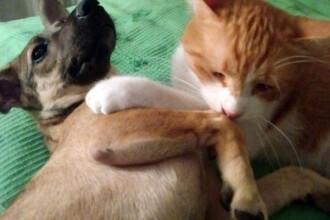 Primaria Capitalei va plati pentru castrarea cainilor si pisicilor