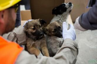 200 de câini de la Cernobîl, trimişi în SUA. Ce au descoperit savanţii despre ei