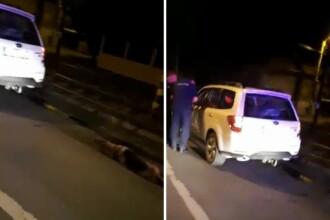 Un șofer din Oradea a lovit un câine pe stradă și apoi l-a legat de mașină. VIDEO