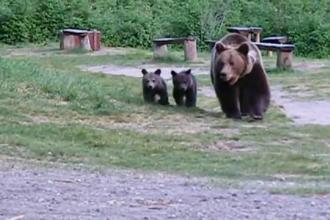 """Problema împușcării urșilor, la DIICOT. """"Grup organizat care şi-a facilitat vânătoarea de trofee"""""""