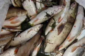 Pești morți pe o distanță de 2 km, pe râul Suceava, din cauza unei poluări industriale masive