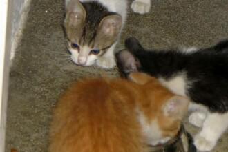 Timișorean cercetat de poliție, după ce 2 pisici aflate în grija sa au murit