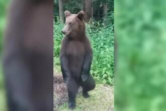 Patru turiști au sunat îngroziți la 112, după ce s-au întâlnit cu un urs... pe munte