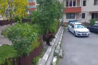 Blocuri cu urşi maidanezi la scară. Soluţia pentru cei care nu vor vecini cu blană şi gheare