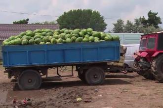 Fermierii din Dăbuleni au ajuns cu pepenii în stradă. De ce nu îi iau hipermarketurile