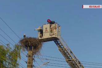 Pompierii gălățeni au intervenit pentru salvarea a 4 pui de barză orfani
