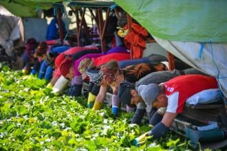 EURES România. 900 locuri de muncă la cules de fructe în Spania. Cu cât sunt plătiți sezonierii români
