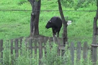 Mai mulți localnici acuză un tânăr din județul Neamț că le abuzează sexual animalele