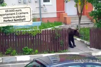 Apartament ieftin, în zonă verde, cu urşi în curte. Cum te fereşti de astfel de surprize
