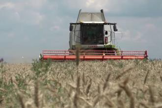 Prețul grâului va crește, din cauza secetei. Producția, cu 40% mai mică față de cea de anul trecut