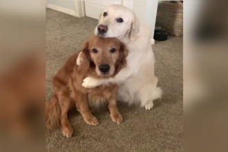 Watson şi Kiko au înduioşat sute de mii de iubitori de animale cu un filmuleţ