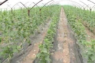 Răsaduri și tratamente gratuite de la Minister pentru fermierii români. Ce condiție li s-a dat