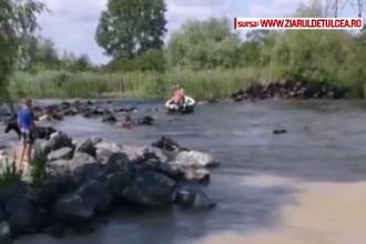 Herghelie de cai, forțată de localnici să treacă un canal adânc. Cum au sfârșit animalele