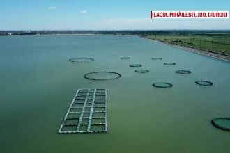 Cum ajungem să consumăm pește contaminat cu metale grele, pe care alte țări îl refuză