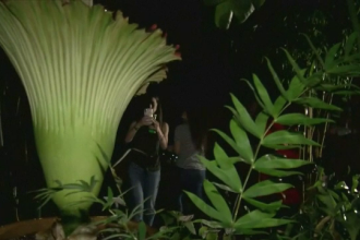 Amatori de senzații tari s-au pozat cu o floare-cadavru, la o grădină din SUA. Reacția lor