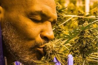 """Cum arată plantația de marijuana a lui Mike Tyson. """"M-am gândit cât bine pot face"""". FOTO"""
