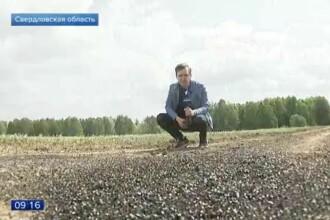 Invazia cu care se luptă un sat din Rusia. Oamenii sunt îngrijorați pentru sănătatea lor