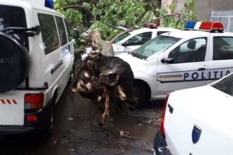 Trei autospeciale de Poliţie lovite de un copac doborât de furtună, în Brăila