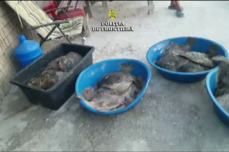 Peste 200 de kilograme de calcan pescuit ilegal, găsite în staţiunea Mamaia